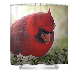 Shower Curtain featuring the photograph Cardinal In Flowers by Debbie Portwood