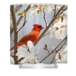 Shower Curtain featuring the photograph Cardinal In Magnolia by Angel Cher