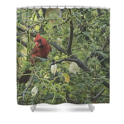 Cardinal In Mesquite Shower Curtain