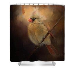 Cardinal In The Evening Light Bird Art Shower Curtain