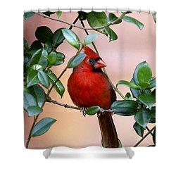Cardinal In The Jasmine Shower Curtain by Myrna Bradshaw