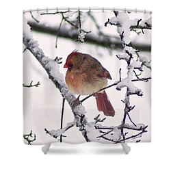 Cardinal In The Snow Shower Curtain