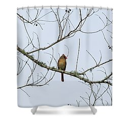 Cardinal In Tree Shower Curtain by Richard Rizzo