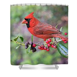 Cardinal On Holly Branch Shower Curtain by Bonnie Barry