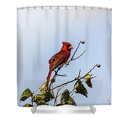 Shower Curtain featuring the photograph Cardinal On Treetop by Robert Frederick