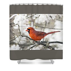 Shower Curtain featuring the photograph Cardinal Spring - D009909-a by Daniel Dempster