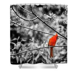 Cardinal... Shower Curtain