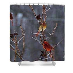 Shower Curtain featuring the photograph Cardinal Trio by Mark McReynolds
