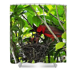 Cardinals Chowtime Shower Curtain by Al Powell Photography USA