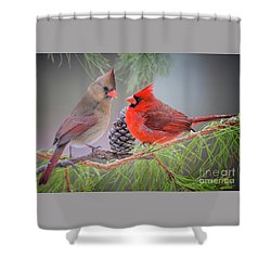 Cardinals In Pine Shower Curtain