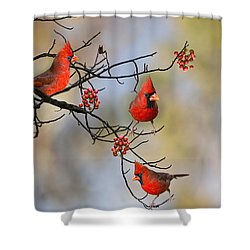Cardinals On A Branch Shower Curtain