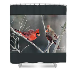 Cardinals On A Gray Day Shower Curtain