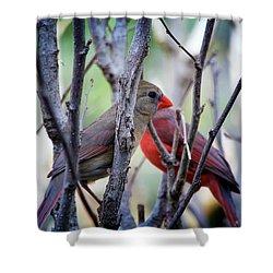 Cardinals Pair Shower Curtain