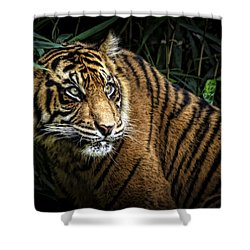 Shower Curtain featuring the photograph Careful by Cheri McEachin