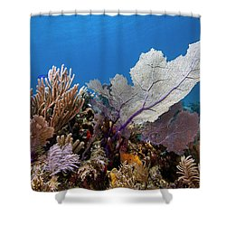 Shower Curtain featuring the photograph Caribbean Beauties by Rico Besserdich
