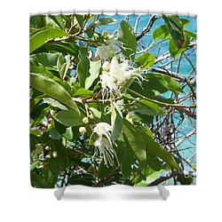 Caribbean Honeysuckle Shower Curtain