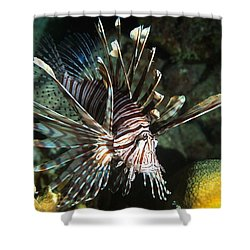 Caribbean Lion Fish Shower Curtain