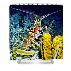 Caribbean Reef Lobster Shower Curtain