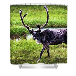 Shower Curtain featuring the photograph Caribou by Anthony Jones
