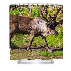 Caribou Antlers In Velvet Shower Curtain by Allan Levin