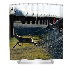 Caribou Cow And Fawn Shower Curtain by Anthony Jones
