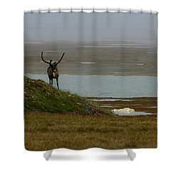 Caribou Fog Shower Curtain by Anthony Jones