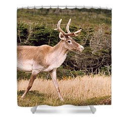 Caribou Shower Curtain by Mary Mikawoz