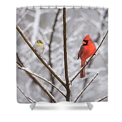Goldfinch And Cardinal Shower Curtain
