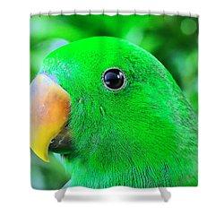 Carlos Avila Shower Curtain