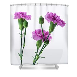 Carnations Three Lavender Shower Curtain