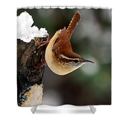 Carolina At The Suet Post Shower Curtain by Skip Willits