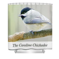 Carolina Chickadee, Animal Portrait Shower Curtain