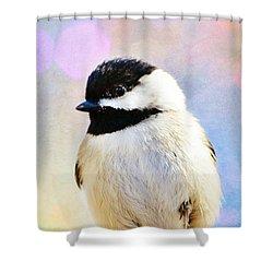 Carolina Chickadee Shower Curtain by Kelly Nowak