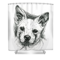 Shower Curtain featuring the drawing Carolina Dog Charcoal Portrait by MM Anderson