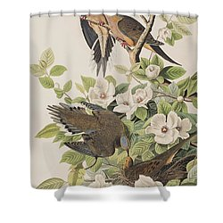 Carolina Turtle Dove Shower Curtain by John James Audubon