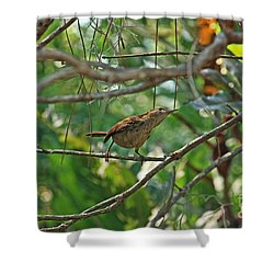 Carolina Wren Shower Curtain