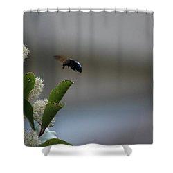 Carpenter Bee Landing Shower Curtain by Colleen Cornelius