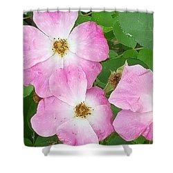 Carpet Roses Shower Curtain