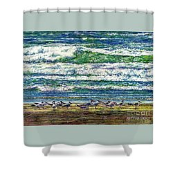 Caspian Terns By The Ocean Shower Curtain
