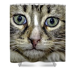 Cat 1 Shower Curtain