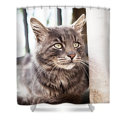 Cat #2480 Shower Curtain
