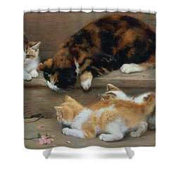 Cat And Kittens Chasing A Mouse   Shower Curtain