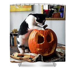 Cat And Pumpkin Shower Curtain by Vicky Tarcau