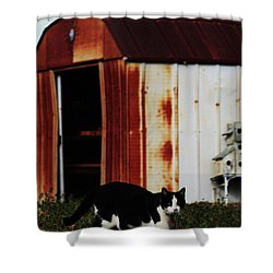 Cat And The Tool Shed Shower Curtain by Kim Henderson