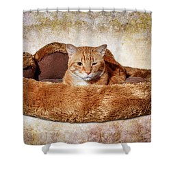 Cat Bed Shower Curtain