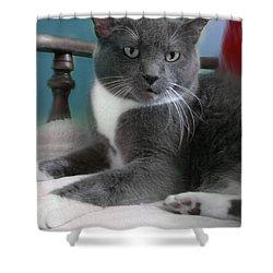 Cat Boticas Portrait  Shower Curtain