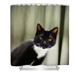 Cat Cat Shower Curtain by Bill Cannon