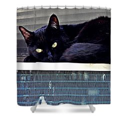 Cat Conditioner Shower Curtain