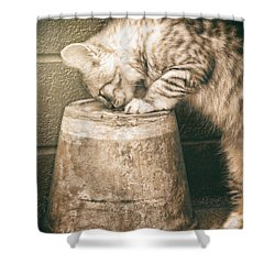 Cat Curiosity... Shower Curtain
