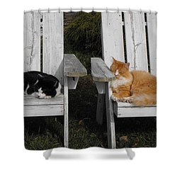 Cat Days Of Summer Shower Curtain by David and Lynn Keller